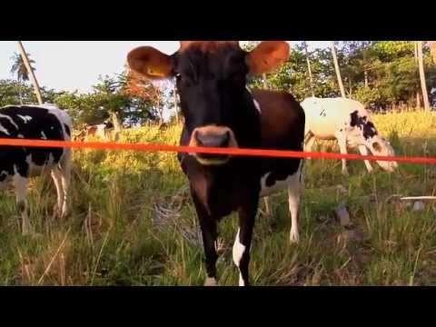 2012年6月のオススメのスラックライン動画を適当に厳選して紹介
