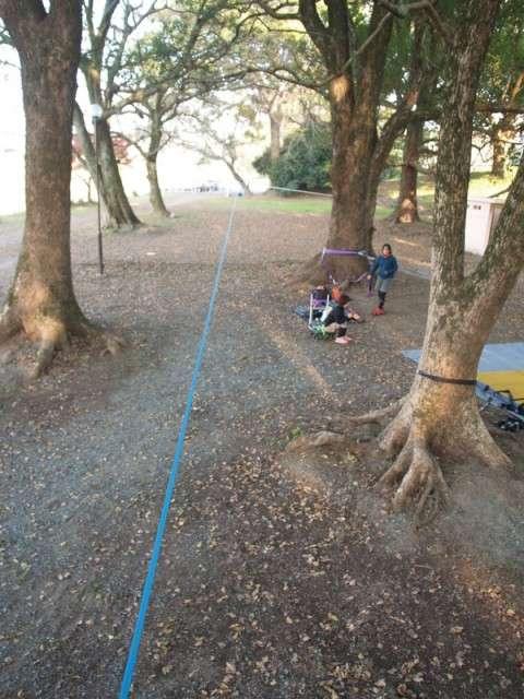 クスノキと杉とエノキの公園