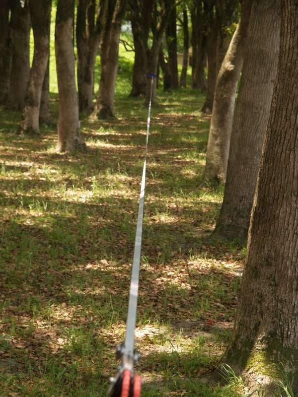 森を楽しむロングライン