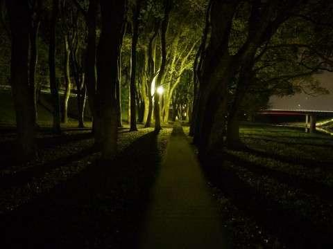 不審者とみ間違えられるリスクなどお構いなしに、夜な夜な公園に通う。