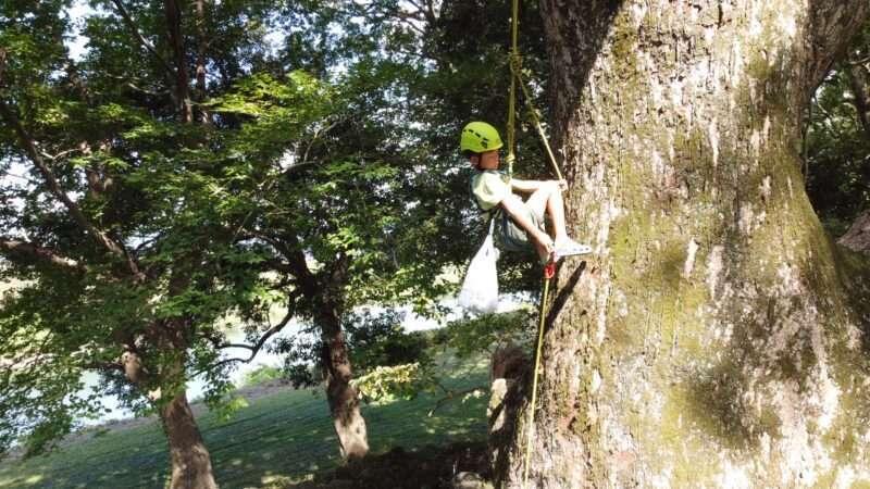 ツリークライミングを登る子供