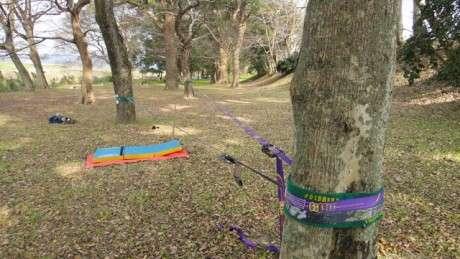 樹木と図鑑とスラックライン