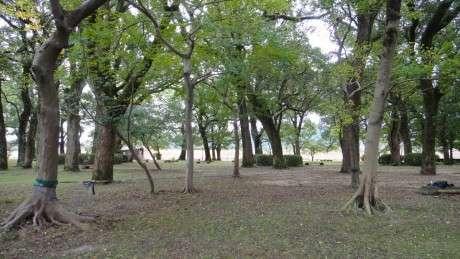 スラックライン基地