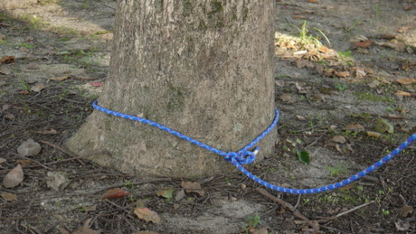 木に結びつける